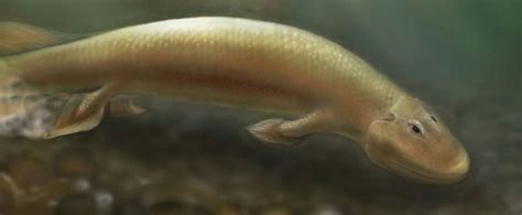 A 375-Million-Year-Old Fish Was The Land-Walking Creature